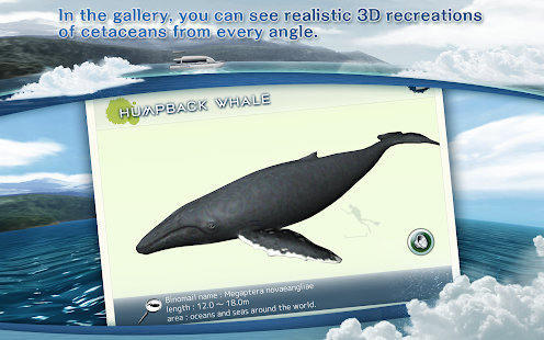 Game REAL WHALES Find the cetacean. APK for Windows Phone