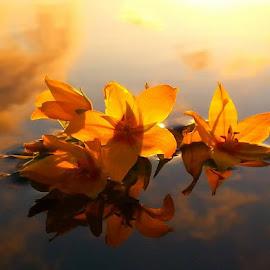 Fallegt sólarlag í kvöld :) by Linda Ragnarsdottir - Nature Up Close Water ( blue, orange. color )