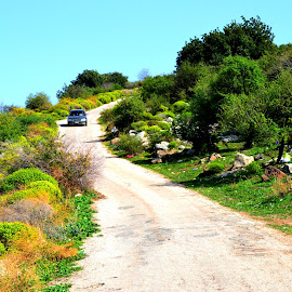 Road in Green by Laith Aldohni - Landscapes Prairies, Meadows & Fields ( nature, green, jordan, road, flowers )