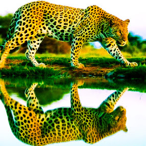 reflet by Cédric Nouvel - Digital Art Animals