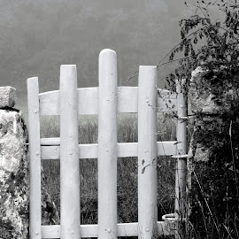 Cancela de madeira by Jorge Coelho - Buildings & Architecture Other Exteriors ( porta, wood, black and white, door )