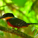 Green-and-rufus Kingfisher