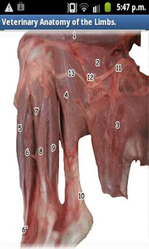 醫療必備APP下載 Vet Anatomy Of The Limbs 好玩app不花錢 綠色工廠好玩App