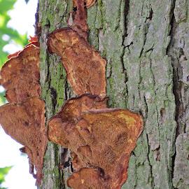 Some Kind Of Fungus  by Cindy Cooper Houser - Nature Up Close Mushrooms & Fungi ( mushroom, fungi, nature, nature up close, nature close up, fungus, nautical, mushrooms )