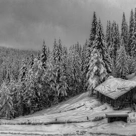 Lonely winter little house... by Стефан Стефанов - Landscapes Mountains & Hills ( mountain, winter, black and white, snow, snowdrop, little, white background, house, landscape, hollydays, b&w )