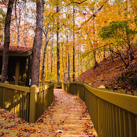 Oak Mountain 1 by Scott Cobb - Landscapes Forests ( board walk, oak mountain, fall colors, autumn, fall, trees, leaves, woods )