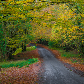 The road to winter  by Chris Wild - Landscapes Forests ( ireland, emo, autumn, trees, kildare, forestry, road, leaves, woods,  )