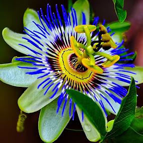by Nikša Šapro - Flowers Single Flower