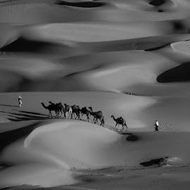Splendor of the desert by Adeeb Alani - Nature Up Close Sand