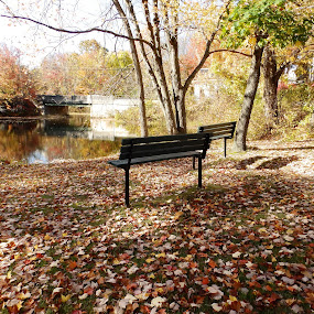 Benches in the fall by Jessie Dautrich - City,  Street & Park  Street Scenes ( water, benches, fall, october, leaves, public, bench, furniture, object,  )
