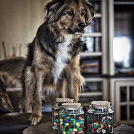 Layla and candy by Jim Antonicello - Animals - Dogs Portraits ( looking, dog, standing, animal )