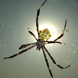 Spider IMG_5619 by Ponco Sujatmiko - Animals Insects & Spiders ( Lighting, moods, mood lighting,  )