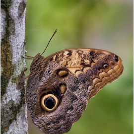 by Rachel Ellentuck - Animals Insects & Spiders ( butterly, nature, butterflies, wildlife, nature photography )