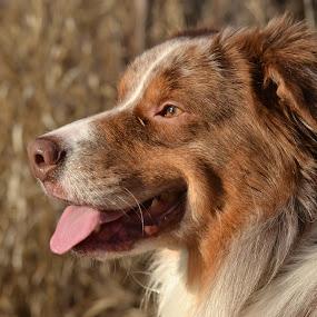 by Jolene Pierce - Animals - Dogs Portraits