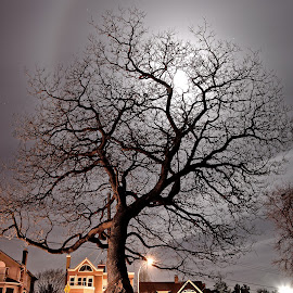 Witch Tree by Jonathan Ferland-Valois - City,  Street & Park  Night ( tree, moonlit, witch )