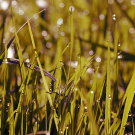 Glimmer by Jax Holmes - Nature Up Close Leaves & Grasses ( nature, grass, green, meadow, garden )