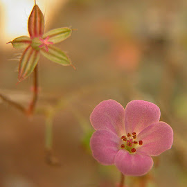 flower by Francisco Costa - Nature Up Close Other plants