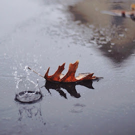 rainy day by Hannah Shea - Nature Up Close Other Natural Objects
