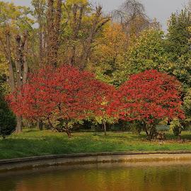 Red Tree by Silviu Nastase - City,  Street & Park  City Parks