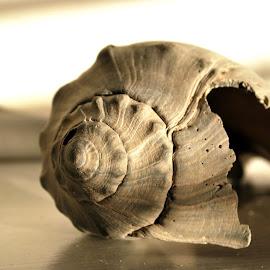 by Elena Stanescu-Bellu - Artistic Objects Other Objects ( broken, up close, seashell, grey, spiral, light )