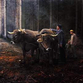 In old days by Matej Skubic - Digital Art People ( forrest, forest light, morning, ox, old days )