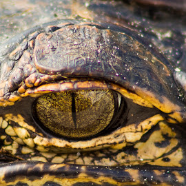 I See you by Jay Dooley - Animals Reptiles