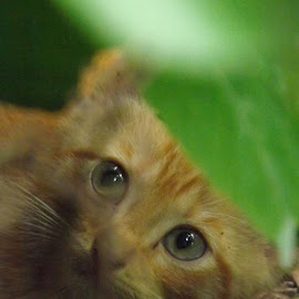by Sarah Thomas - Animals - Cats Kittens
