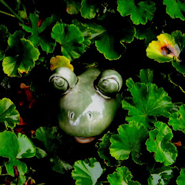 Froggy day by Liz Hahn - Nature Up Close Gardens & Produce