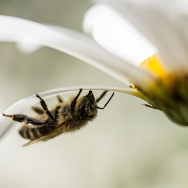 by Lucas Albarus - Novices Only Macro