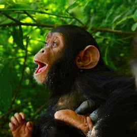 Monkeying around by Janet Rose - Novices Only Wildlife