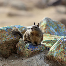 The squirrel that ruled the iron ores by Salman Mohammed - Animals Other Mammals