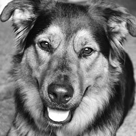 Daisy by Nat Hilliar - Animals - Dogs Portraits ( black and white, companion, pet, dog portrait, dog, portrait,  )