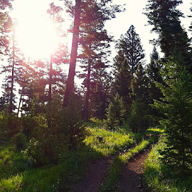 Idaho Sun by Samantha Farr - Novices Only Landscapes ( idaho, iphoneography, sunshine, forest, idahome )