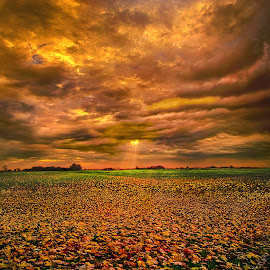 Fallen by Phil Koch - Landscapes Prairies, Meadows & Fields ( vertical, photograph, fine art, travel, yellow, leaves, love, sky, nature, autumn, flowers, light, flower, orange, agriculture, horizon, rural, portrait, environment, dawn, serene, outdoors, trees, floral, inspirational, natural light, wisconsin, ray, landscape, phil koch, sun, photography, blue sky, horizons, inspired, clouds, office, park, green, back light, scenic, morning, shadows, field, red, color, sunset, peace, fall, meadow, landscapephotography, beam, earth, sunrise, landscapes, mist,  )