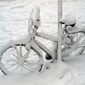 A bike in the snow by Edwin Butter - Transportation Bicycles ( snowfall, wheel, street, frost, road, storm, parked, bicycle, city, bike, cold, seat, transport, ice, snow, weather, buried, covered, cycle, white, snowy, tire, winter, london, season, biking, freeze, outdoors, blizzard, abandoned )