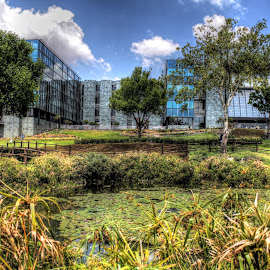 Vodaworld by Niki Ashcroft - Buildings & Architecture Other Exteriors ( office, vodacom, exterior, outdoors, trees, pond, business )