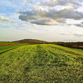 Clouds over fields of young wheat by Mursida Musić - Landscapes Prairies, Meadows & Fields