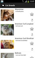 Screenshot of My Cats Breeds Premium
