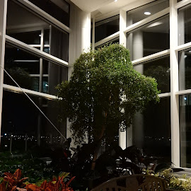 st luke's healing garden by Marcellino Guarnero - Buildings & Architecture Architectural Detail