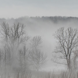 Landscape in Fog by Lily Spencer - Landscapes Forests ( mountains, fog,  clouds, trees, landscapes )