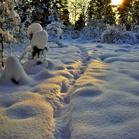 Footprints in the snow by Stefan Pettersson - Landscapes Sunsets & Sunrises ( sunset, beautiful, snow, white, landscape )