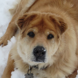 Snow Dog by Marcia Taylor - Novices Only Pets (  )