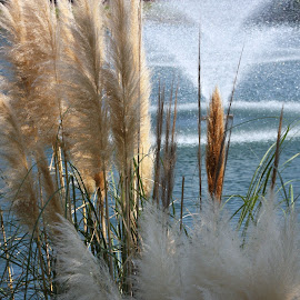 Cattails & fountain by Joscephus Wallace - Landscapes Prairies, Meadows & Fields ( fall, color, colorful, nature )