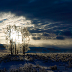 Moody morning in the park by Steve Outing - Landscapes Sunsets & Sunrises ( clouds, national park, yellowstone, winter, sky, cold, snow, trees, sunrise, landscape,  )