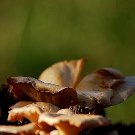 by Ayahnya Cakrabuwana - Nature Up Close Mushrooms & Fungi