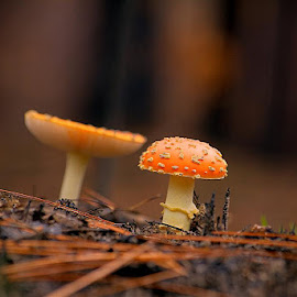 Mushrooms by Isaac Golding - Nature Up Close Mushrooms & Fungi