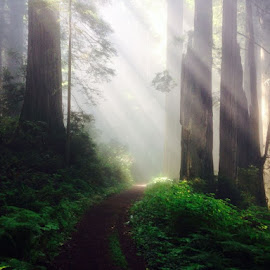 Redwood forest  by Parker Johnson - Instagram & Mobile iPhone (  )
