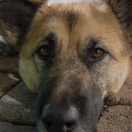 by Tim Mikolajczyk - Animals - Dogs Portraits ( pet, outdoor, dog, portrait, animal )