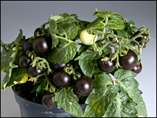 _45138596_tomatoes226.jpg