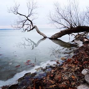 Winter Calm by Di Mc - Novices Only Landscapes ( water, canada, ice, snow, lake, orillia,  )